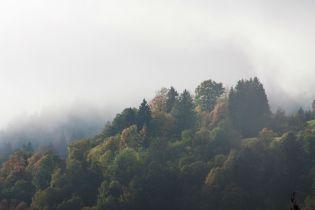 Leben ist Nebel rückwärts