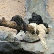 Muc Zoo_Affe_2