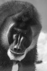 Muc Zoo_Affe_6
