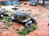 Muc Zoo_Turtle