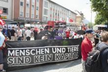 Banner - Kapital