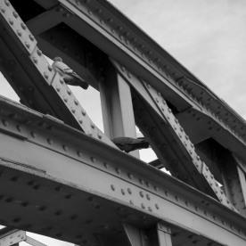 Hackerbrücke - Stahlvogelhaus