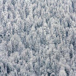 Winter - 1